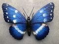 Wanddecoraties Vlinders