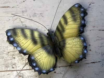 magneet vlinder geel 12x8cm