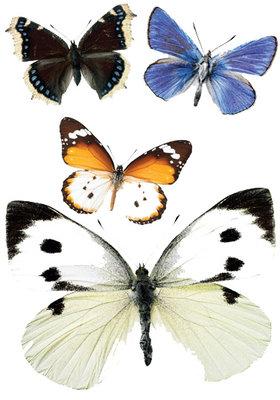 interieurstickers vlinders voordeelset