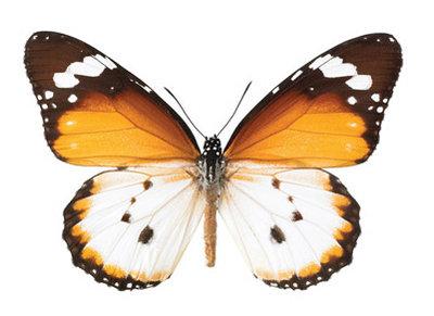 interieursticker vlinder M 17 x 11 cm