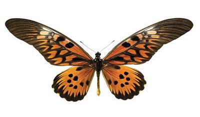 interieursticker vlinder M 16 x 10 cm