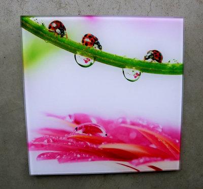 glasschilderij lieveheersbeestjes 20x20cm