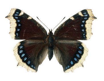 vlinder decoratie sticker