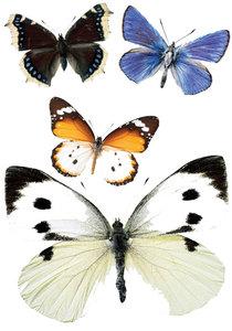 vlinder muurstickers