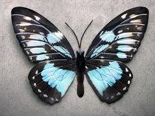 metalen vlinder om aan de muur te hangen