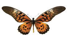 vlinder woonsticker