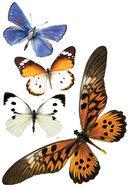 vlinder stickers interieur