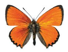 vlinder sticker interieur